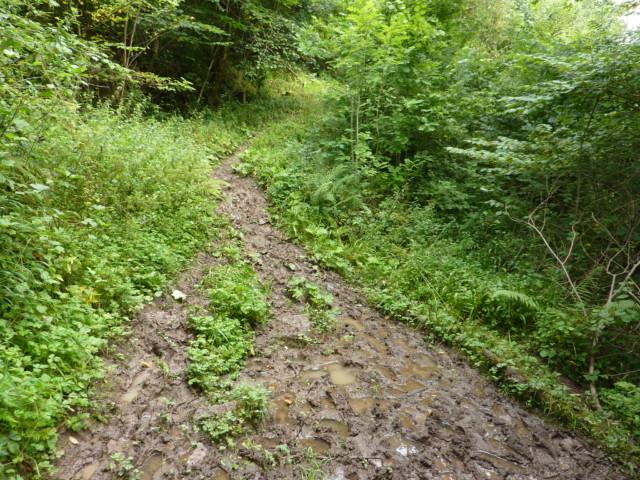 A very muddy path in Denton Wood