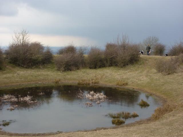A dew pond on Chanctonbury Hill