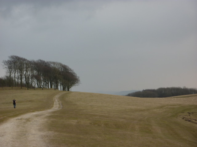 Trees marking the site of the prehistoric A dew pond on Chanctonbury Ring fort