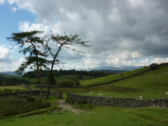 Trees at Hag End, on the Dales Way