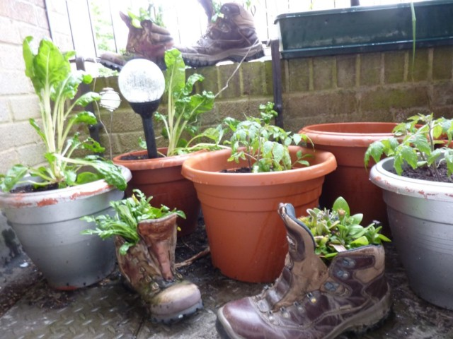 Hiking boots used as flower pots