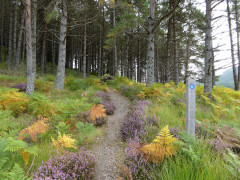 Enchanting path in Black Wood, near Laggan on the East Highland Way