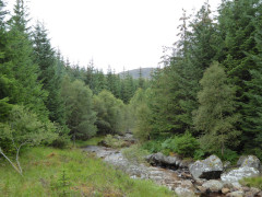 Corrour Forest