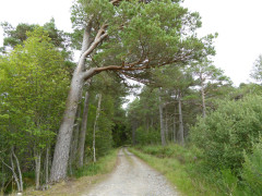 Entering Laggan Forest