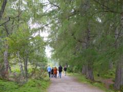 People walking in the Rothiemurchus Estate