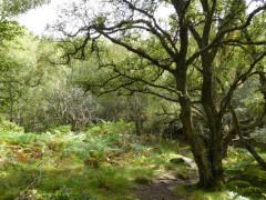 A tree near Kinguisse