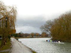 Rowers on the Thames near Oxford.  That's the Thames.  Not the Isis.  The Thames.