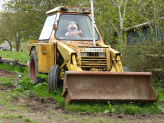 'Elmo' stuffed toy 'driving' a yellow JCB digger