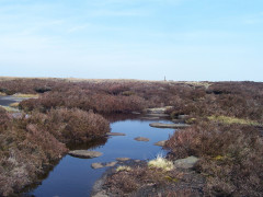 Peaty pools on Pennine moorland