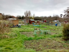 Allotments in Foots Cray, Sidcup