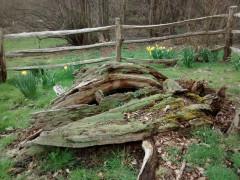 Wilberforce Oak