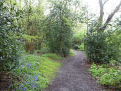 Path through Littleheath Wood