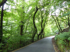 Road on the way out of Ambleside, near Stockgyhll Force