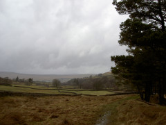 Fields near Alston