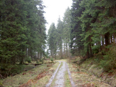 The track to the village of Byrness