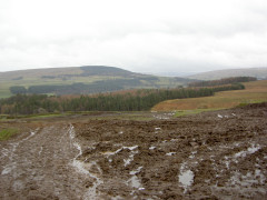 Horribly churned up and muddy field
