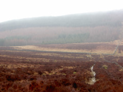 Moorland and a path leading to Redesdale Forest