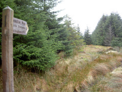 Signpost in Redesdale Forest
