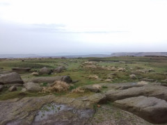 Greenery on Kinder Scout