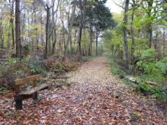 Bishop's Wood