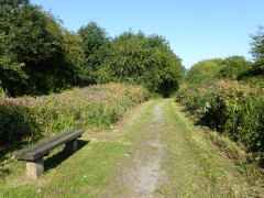 A bench in Crane Bank Water Meadows