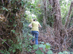 Battling through undergrowth in Donkey Wood