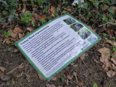 Poster for improvement works at Donkey Wood, lying on the ground