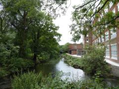 The Hogsmill River at Kingston