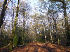 Harrow Weald Common