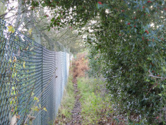 Overgrown path near Stanmore
