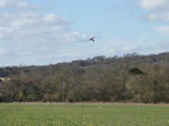 A bird scaring kite