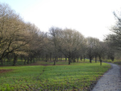 Path going through Monken Hadley Common