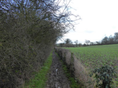Muddy path, officially known as Rectory Farm Road