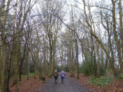Tree lined path in Trent Country Park