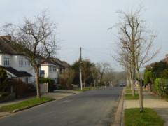 Suburban street in Upminster