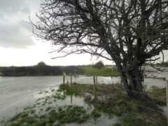 Flooding at Carswell Marsh