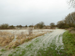 Flooded field at Duxford