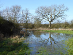 Flooded field at Upper Inglesham