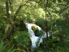 Colwith Force – a waterfall in the trees