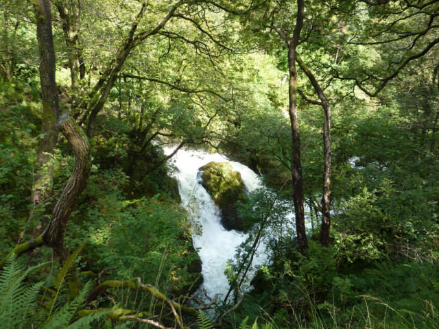 Colwith Force - a waterfall in the trees