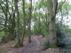 Woodland area next to Stockport Golf Club