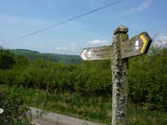 Glyndŵr's Way signpost covered in lichen