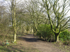 Trees in Chinley Park