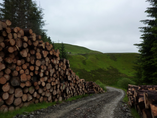 Piles of cut logs in a commercial forest on the Southern Upland Way