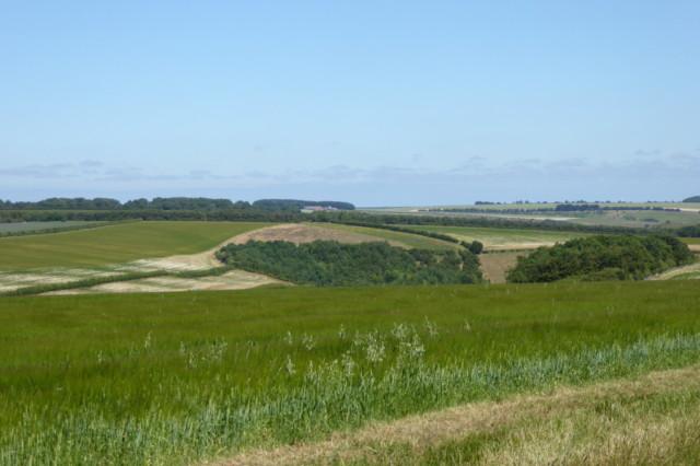 Fields in Cow Wold