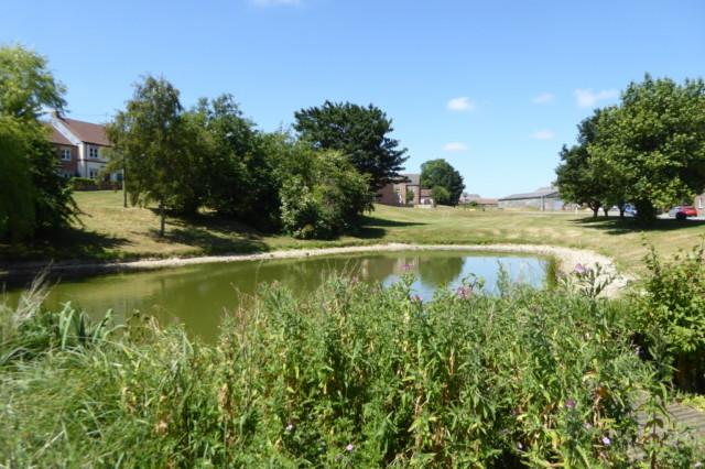 Fridaythorpe's duck pond