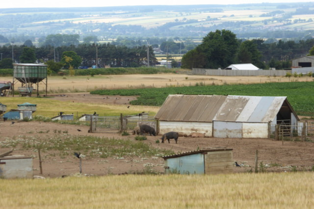 Pig farm at Potter Brompton, on the Yorkshire Wolds Way
