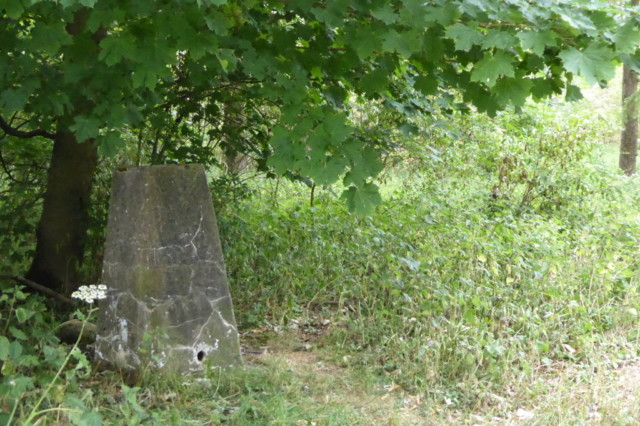 A trig point surrounded by trees and bushes