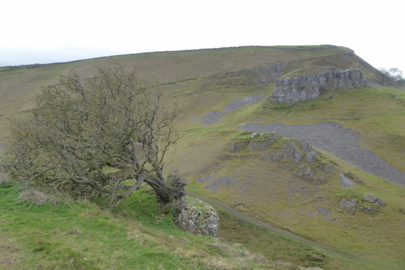 An uprooted tree and Peter's Stone at Cressbrook Dale