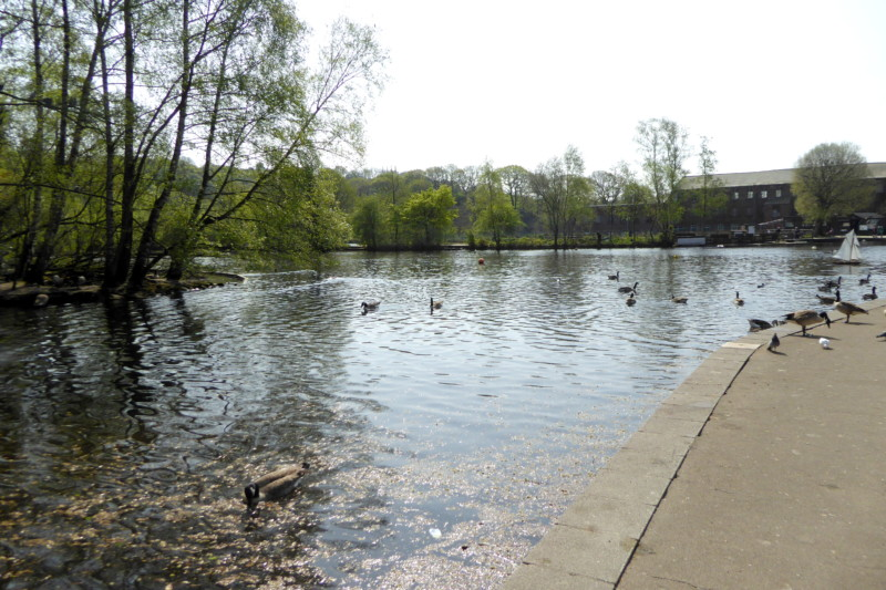 The millpond at Etherow Country Park